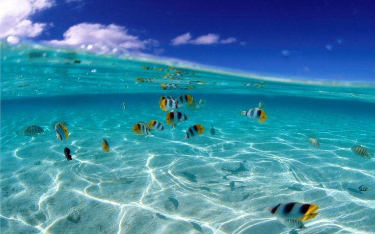 Underwater fish walk along the ocean 39 s floor for 405 tropical fish