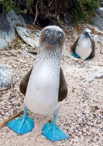 なんだ!この鳥ははじめて見た!キレイなブルーな脚をもっている!中国人もびっくり! : (*゚∀゚)リアル中国の反応