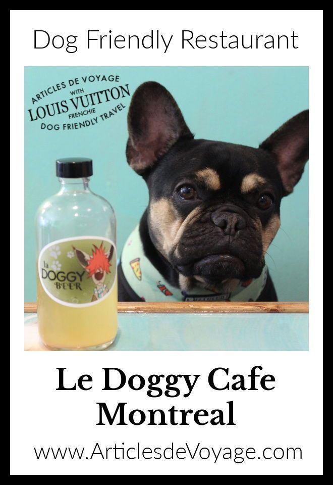 As The Name Would Suggest This Is A Cafe For Dogs They Just