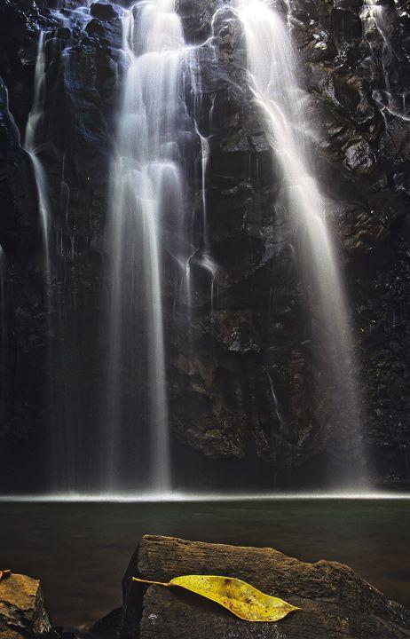Silver Thread Gold Leaf. Tableland Falls, Cairns, Australia.