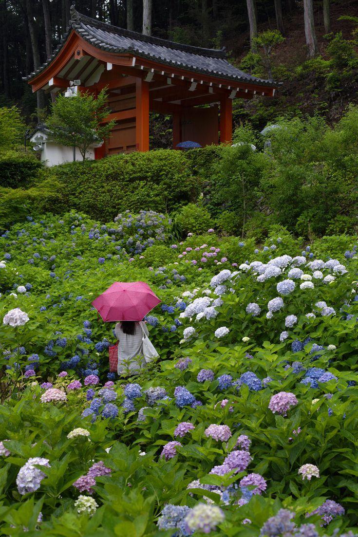 9 Japanese Plants For A Zen Garden Japanese Plants Japanese Garden Japanese Garden Plants