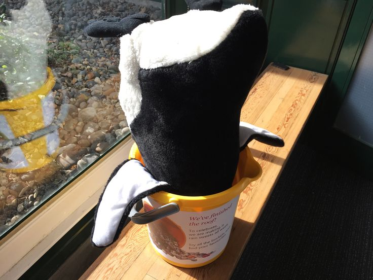 Pablo Penguin gets a little over excited attempting to reach the last few sweets in on particular bucket.    We think we might be able to use this a a penguin trap in future.