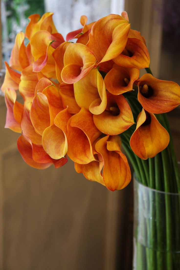 44 best flower inspirations calla lilies images on pinterest calla hot shot dhlflorist Images