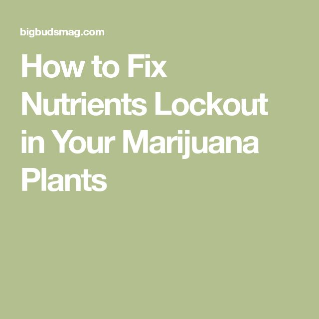 How to Fix Nutrients Lockout in Your Marijuana Plants