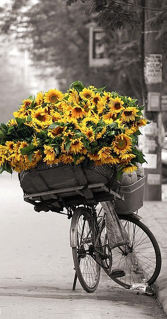 Black and white bike and background with yellow sunflowers! Super cool way to do a picture.