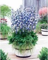 Cette haie vous procurera un décor changeant au fil des 4 saisons ! Plantée une fois pour toutes, elle deviendra plus belle d'année en année ! De culture facile dans tout bon sol de jardin, ces arbustes ont été sélectionnés par nos experts jardiniers pour à la fois masquer un vis-à-vis et fleurir votre jardin. Cette collection est composée de : <br>1 Viorne boule de neige (Viburnum opulus 'Roseum' ) : des fleurs blanches au printemps comparables à des boules de neige et un feuillage...