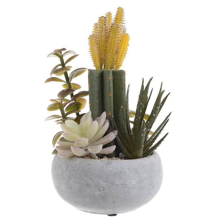 Plant In A Pot - Flowers - Plants - DECORATIONS - inart