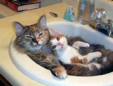 Cats: It's Nap time!
