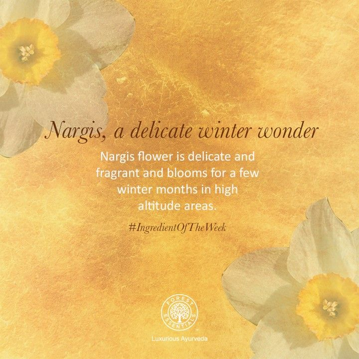 Nargis is a delicate flower with a soft, floral fragrance. Our Nargis-based products leave the skin beautifully scented, and provide nourishment and moisture. Visit our website to see the complete range : http://www.forestessentialsindia.com/catalogsearch/result/?q=nargis