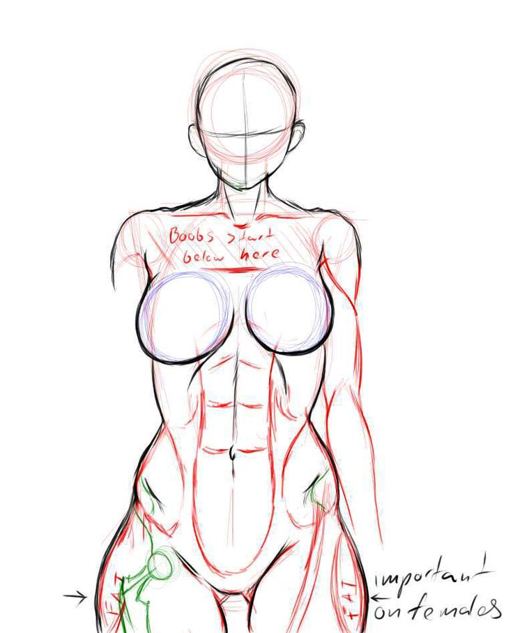 The 86 best Torso images on Pinterest | Drawing tutorials, Human ...