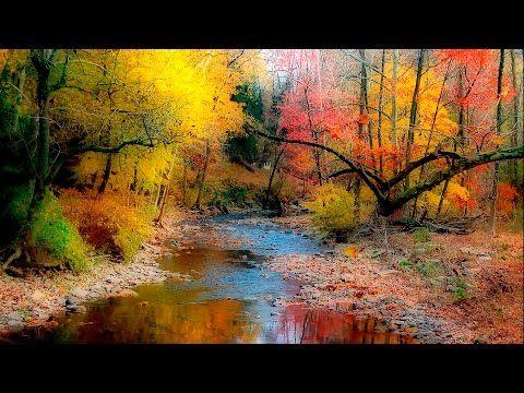 Musique Relaxante, Flûte et de la Nature, Musique pour Dormir - YouTube