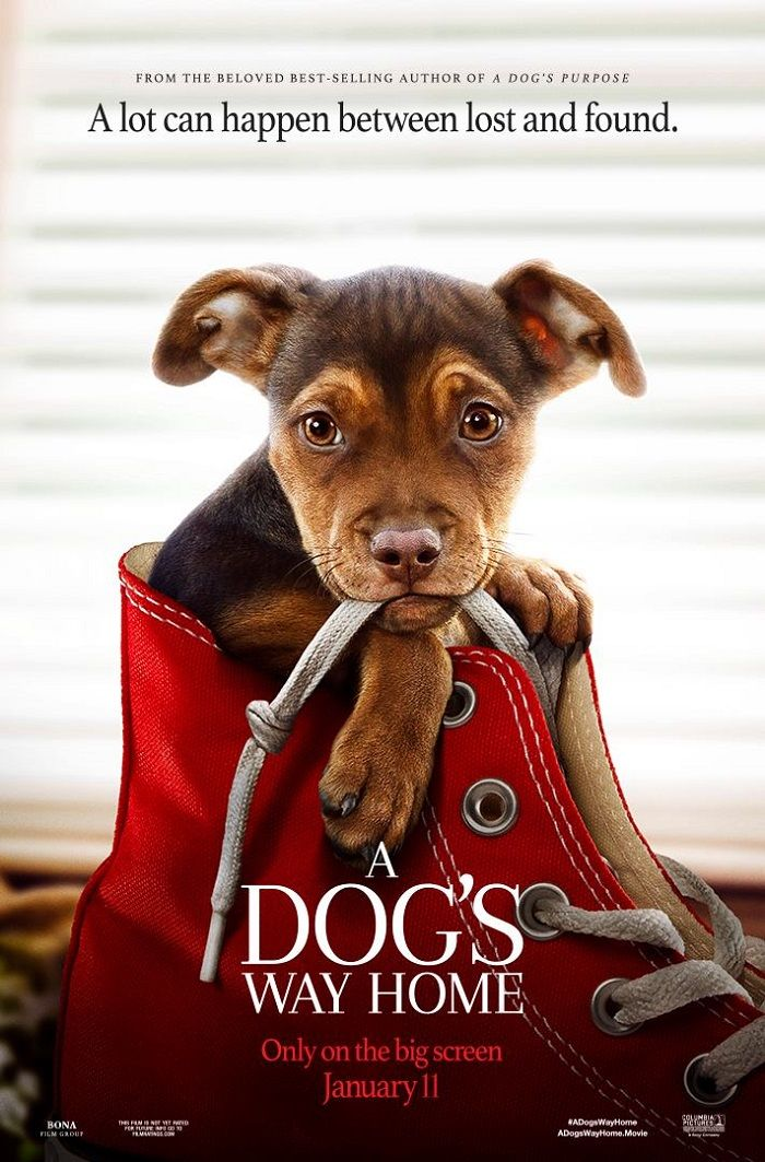 A Dog's Way Home Giveaway Ends 1/17, U.S Only Home