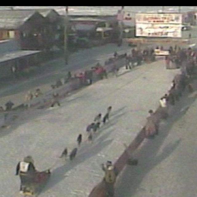 See the end of the Iditarod from Nome Alaska!! Been there done that!!