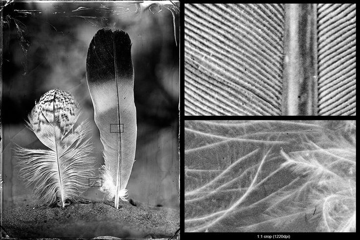 Collodion wet plate glass negative (18x24cm) http://blenditak.blogspot.hu/2017/06/madartollak-feathers.html