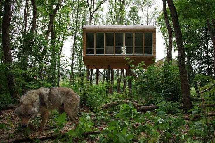 Das Baumhaus Tree Inn liegt mitten im Wolfcenter Dörverden in Niedersachsen.