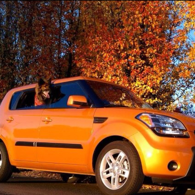 66 Best Images About Kia HAMSTER Soul! On Pinterest