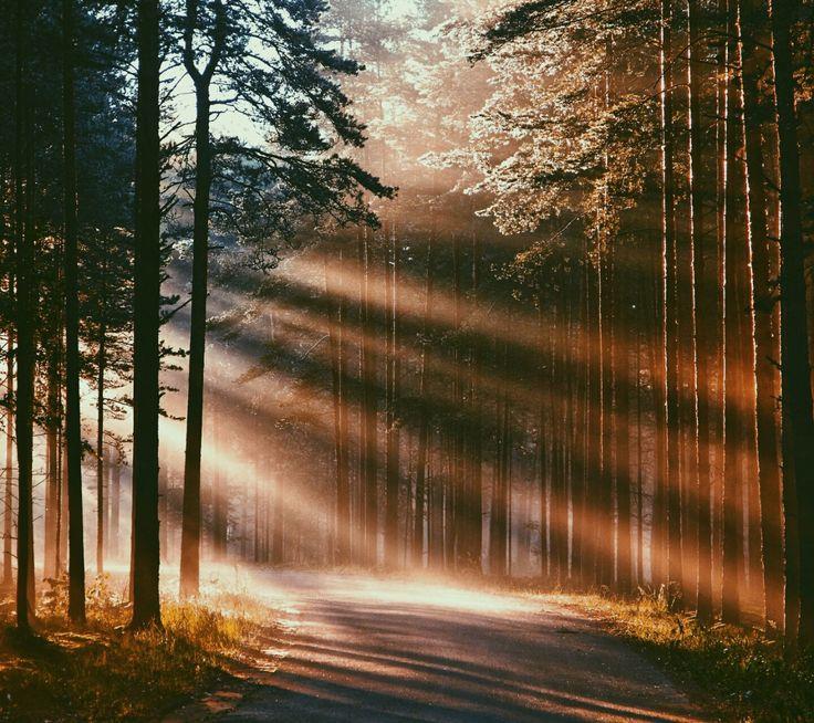 beam of light #WildTraveller