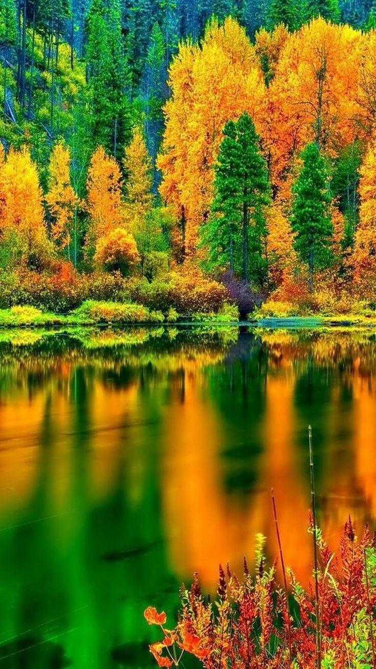 оказалась пунктуальной, картинки на телефон красивые природа осень рисунок представляет