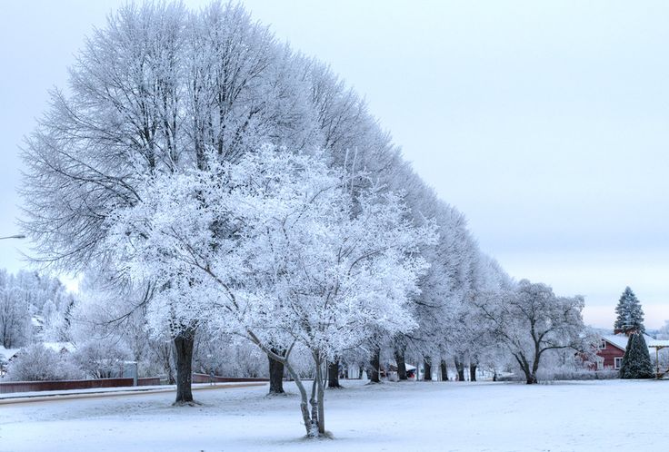 Frosty trees in Siljansnas, Sweden