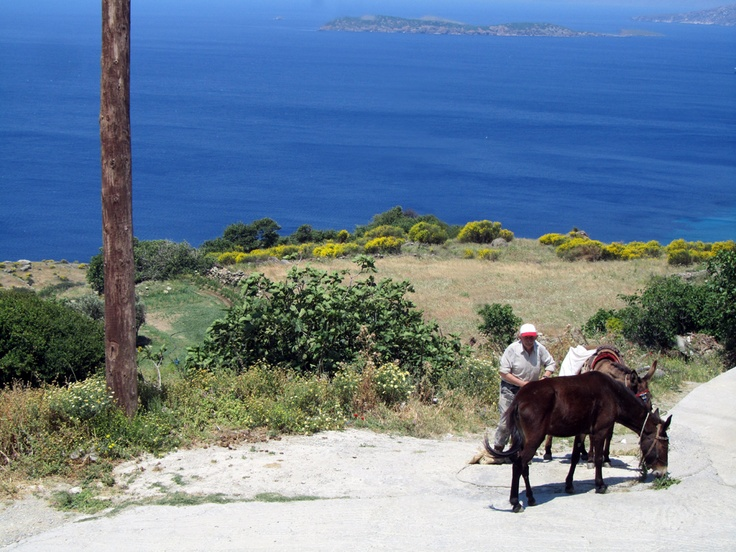 Greek style transport  at Andros #krinossuiteshotel #krinoshotel #andros #batsi #Cyclades #Greece #visitgreece #holidays #achla #micraagglia #micraanglia