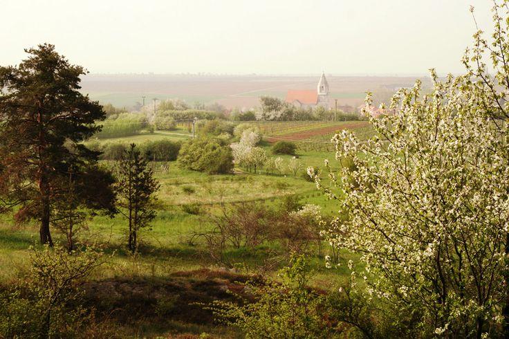 Pohled na Hnanice z Fládnitzského vřesoviště