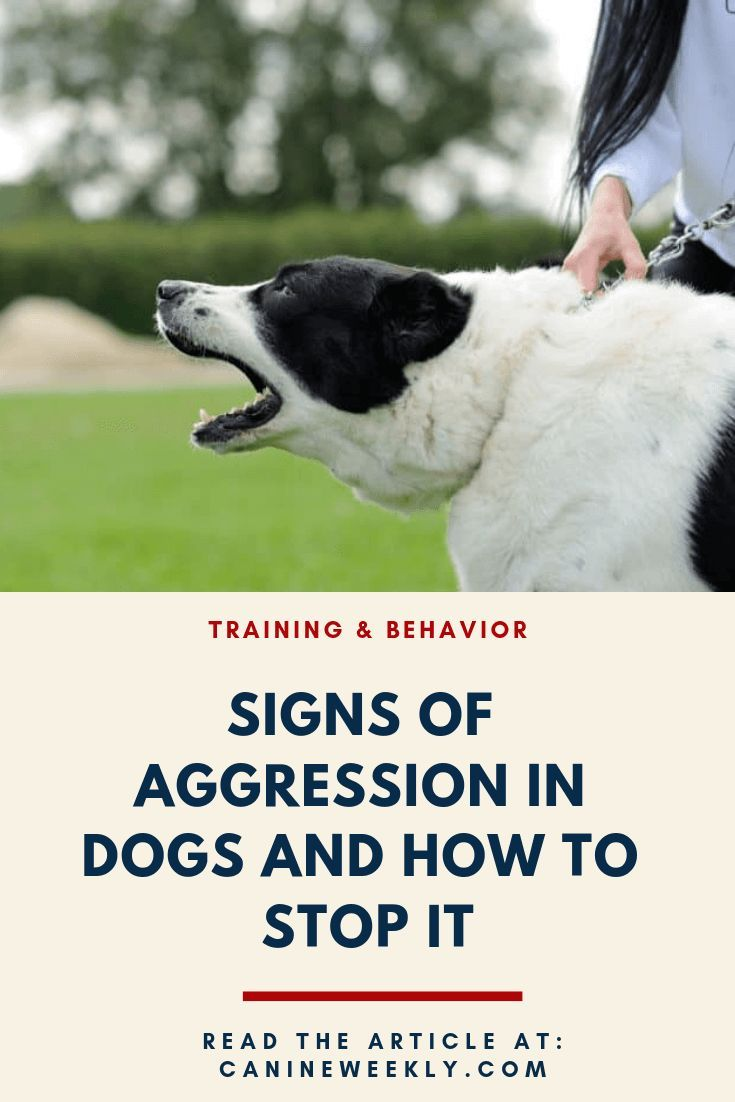How To Calm An Aggressive Dog Top Aggression Training Tips