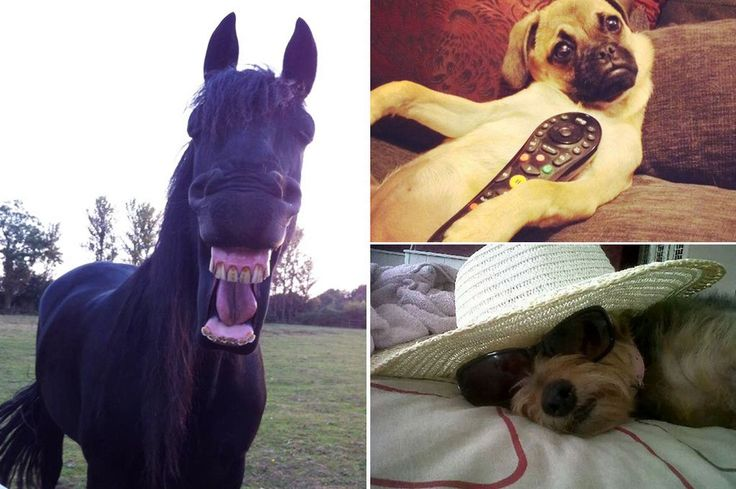Should your pet be famous? The Sunday People wants your cutest, craziest and wackiest pictures
