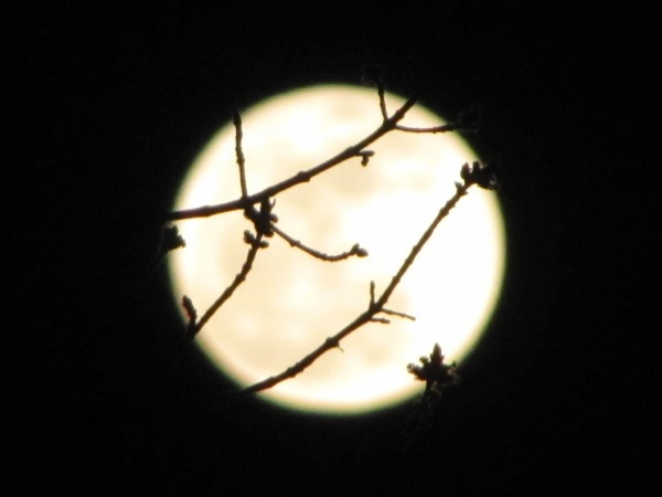 Look outside your windows right now.  :-)  http://marcphotogallery.com/arlington-full-moon.html Sticks Insects,  Walkingstick, Travel Photos, Full Moon, Walks Sticks
