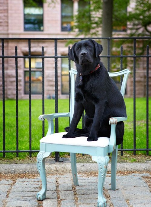 Sneak Peek: Best of Dogs. Winston looking regal in front of his New York City home. #sneakpeek #dogs Pet Love | handsome guys picture handsome black boy