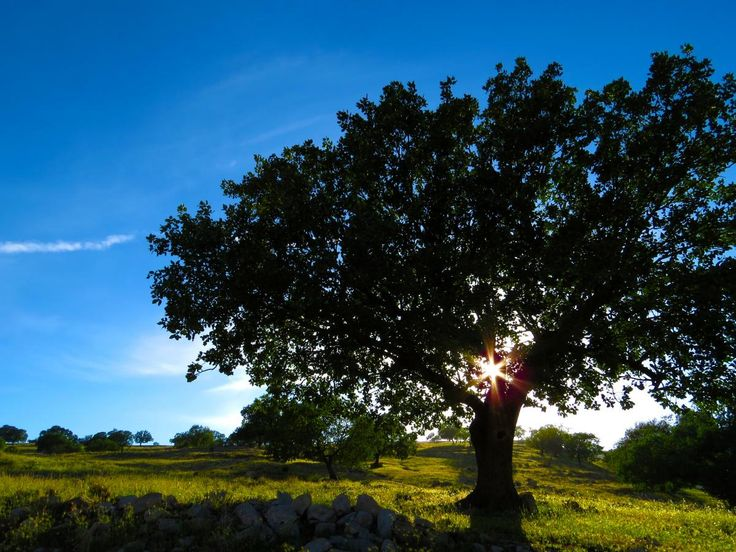 ❕ Wide View Tree and Green Grass during Daytime - get this free picture at Avopix.com    ✅ https://avopix.com/photo/49240-wide-view-tree-and-green-grass-during-daytime    #oak #tree #forest #landscape #trees #avopix #free #photos #public #domain
