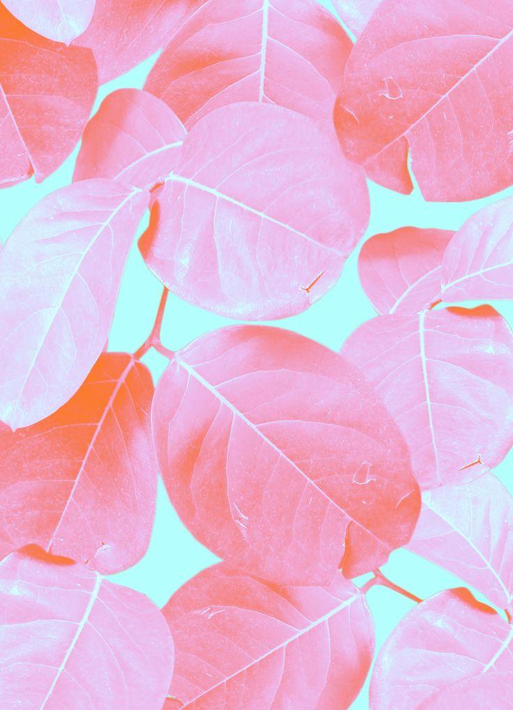 Pink leaves //