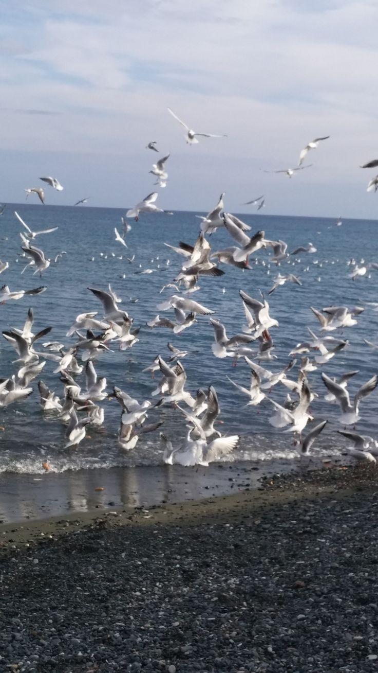 Παραλία -Γλάροι-Λεμεσός