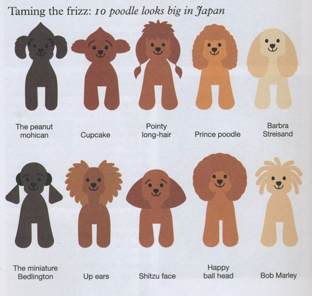 Some really crazy poodle clips!  poodle_looks_japan-asian-dog-grooming-chart-diagram.jpeg 632×600 pixels