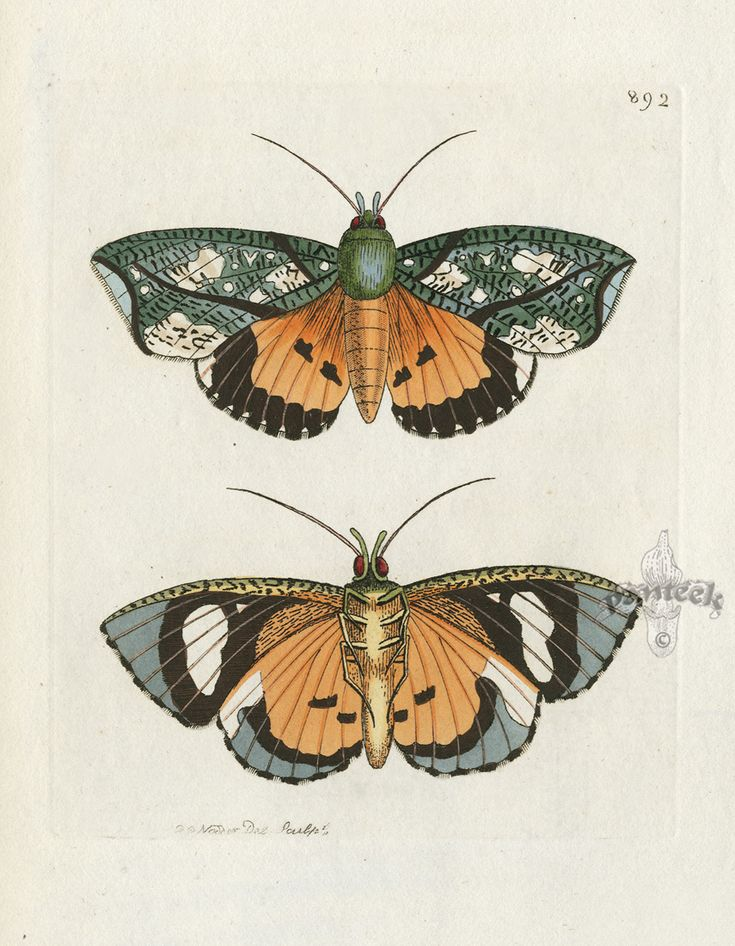 Shaw and Nodder Naturalist's Miscellany 1795-1813