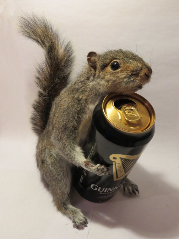 Steaming Squirrel - Taxidermy, Beer Holding, Freestanding