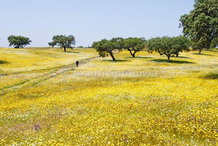Spring in Alentejo, Portugal
