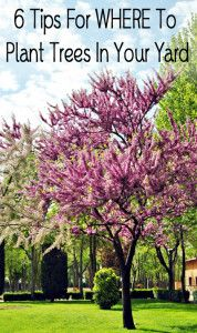 ~6 Tips for where to plant trees in your yard~