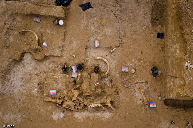 Vue zénithale du squelette de mammouth en cours de fouille à Changis-sur-Marne (Seine-et-Marne), 2012.L'animal aurait vécu entre 200 000 et .50 000 avant notre ère,il est le 3° mammouth retrouvé en France. Paléolithique..