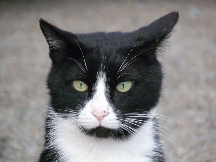 Vermiste katten facebook
