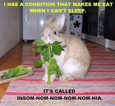 rabbits look so cute when they eat