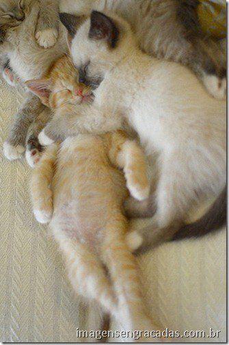 gatinhos-fofos-se-abraçando