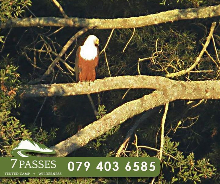 Grab your binoculars and enjoy the unique bird life at #7Passes and if you are lucky, you might spot the famous Fish Eagle. To book your stay, call us on 079 403 6585. #BirdWatching #attractions