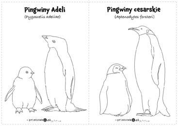Pingwiny Adeli i pingwiny cesarskie - Printoteka.pl