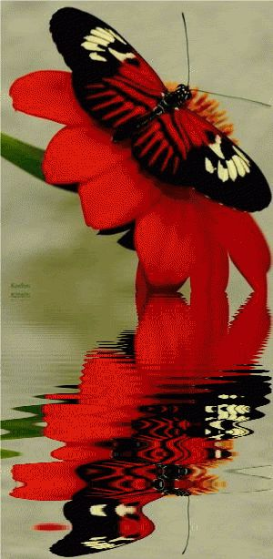 Animated Insects, Butterflies, Animated Butterflies, Animated Gif, Reflection, Water Reflections, Insects, Animated Graphics, Animated Gifs, Keefers