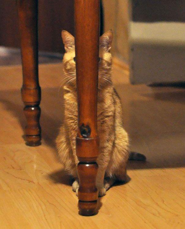30 chats qui maîtrisent l\u0027art de se cacher comme personne. De vrais ninjas