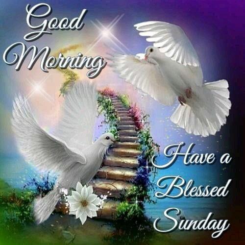 Good Morning Sunday God : Best images about happy sunday on pinterest