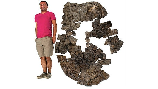 Hallan tortuga gigante que vivió en Colombia hace 60 millones de años