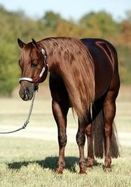 Pretty But I dont like manes past the shoulder