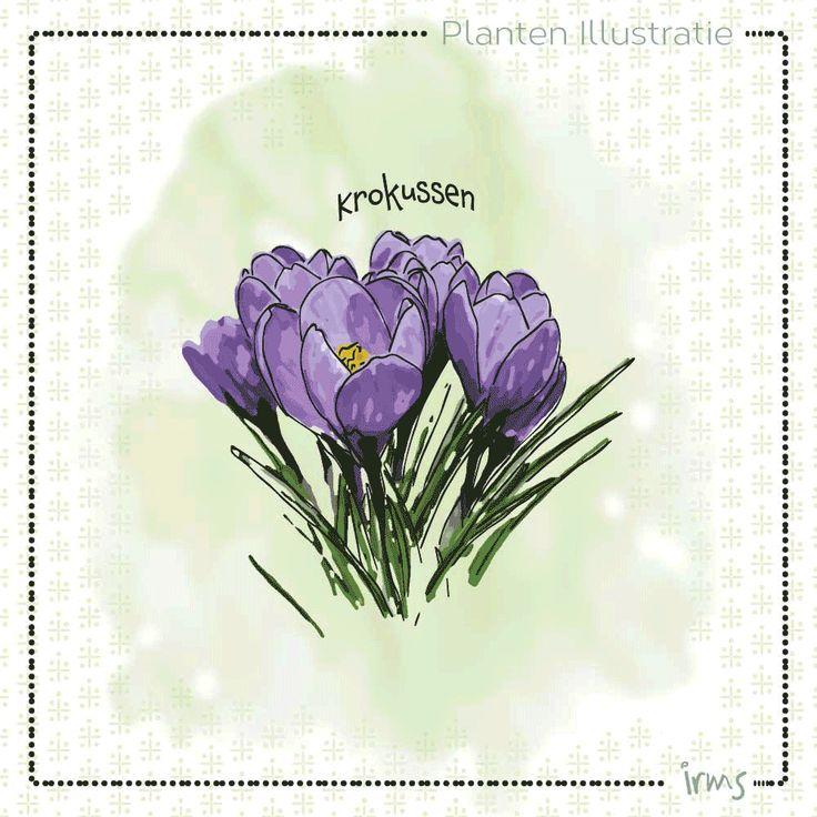 Wat zijn stinzenplanten? Deze mooie planten van Amelisweerd. Sneeuwklokjes, hyacinten, daslook, bostulpje, maarts viooltje en het bosanemoontje allemaal bolgewassen die behoren tot de stinzenplanten.