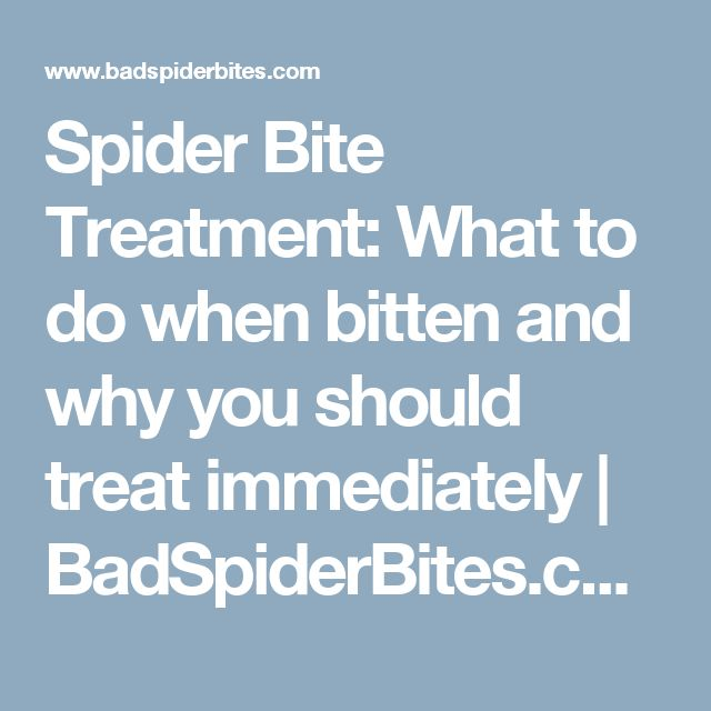 Spider Bite Treatment: What to do when bitten and why you should treat immediately | BadSpiderBites.com